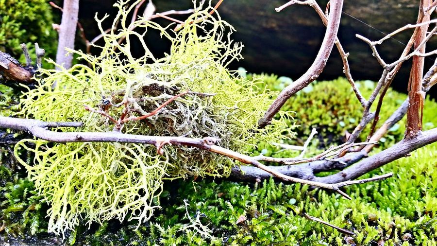 Moss. Eyem Nature Lovers  Mountain Stream Nature_collection