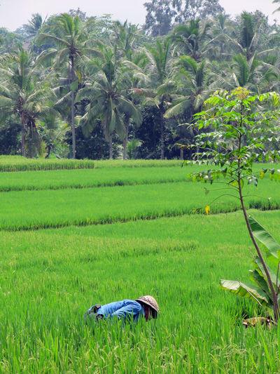 View of farm in field