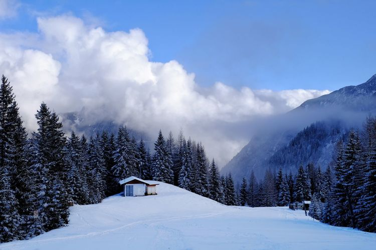 Cottage on snow covered field amidst trees against sky