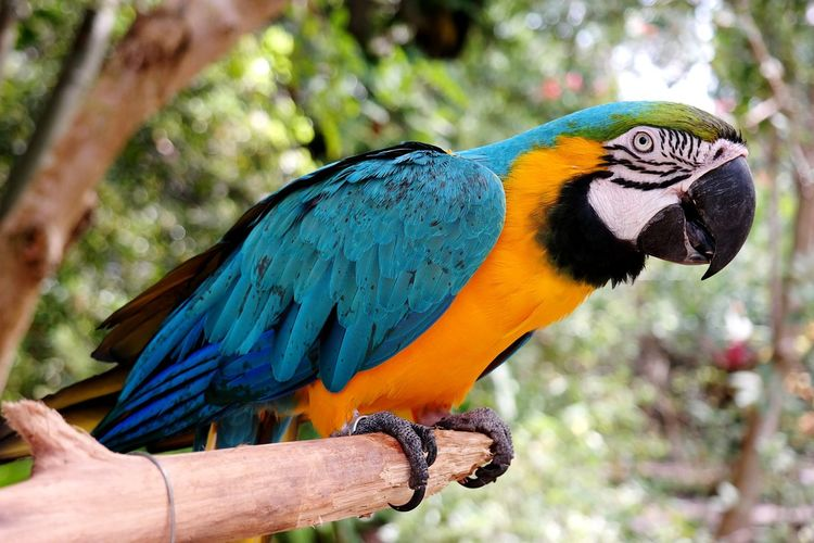 Samsungphotography Samsung Nx300 NX300 Peroquet Bird Exotic Exotic Bird Bahamas Macaw Bird Perching Gold And Blue Macaw Rainbow Lorikeet Parrot Multi Colored Blue Close-up