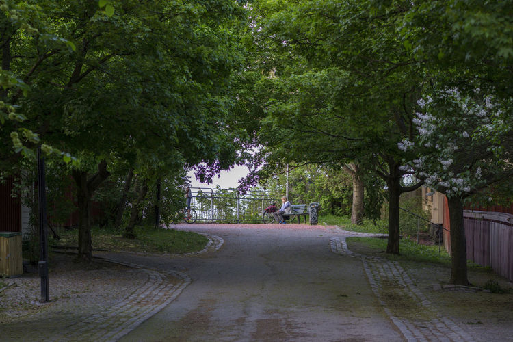 Footpath Lonely Lonely Man Nature Outdoors Path Solrosparken Spring Stockholm Södermalm