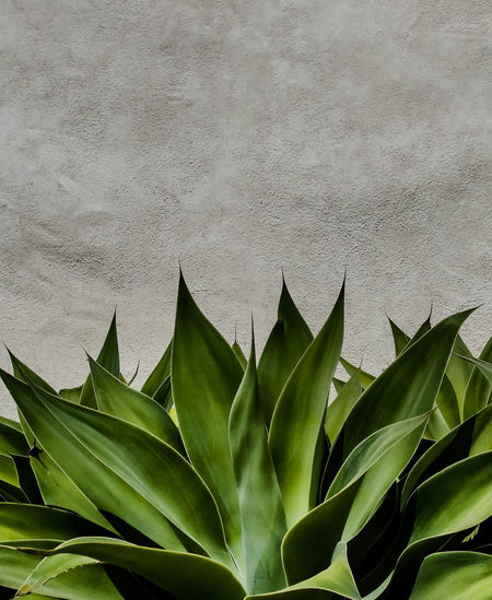Close-up of succulent plants growing against wall