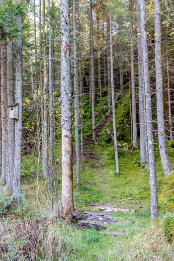 Autumn Beauty In Nature Birdhouse Day Forest Nature No People Outdoors Path Stairs Sweden