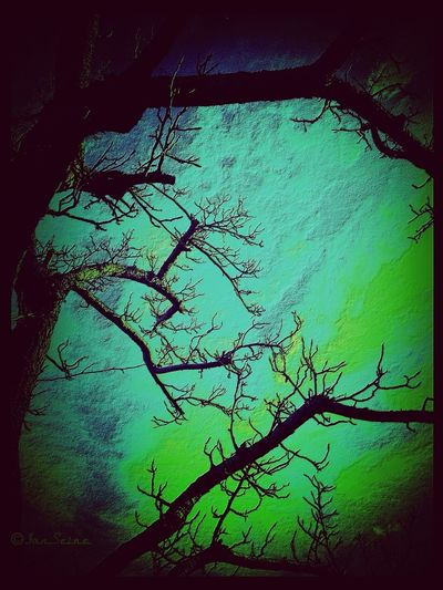 Frankenstein, Victor Silhouette Water_collection Tree_collection  EyeEm Nature Lover
