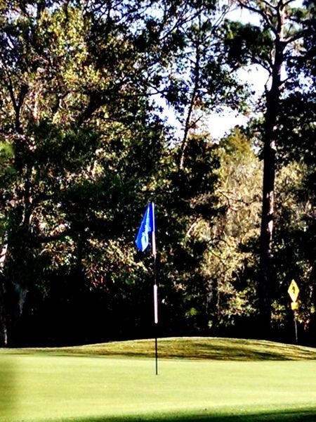 Flag Stick Golf Course East Lake Woodlands Golf Course, Oldsmar, FL Nature Photography Golf Course Photography Golf Course Beauty Tree Flag Outdoors Grass Golf Beauty In Nature Green - Golf Course Tranquility Nature An Eye For Travel
