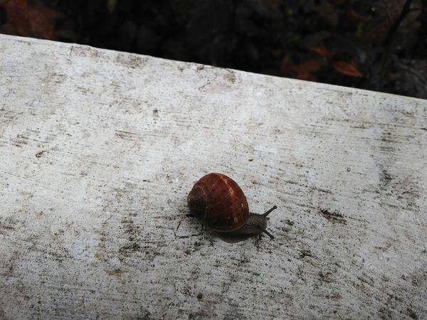 Escargot sur le bord de ma fenêtre Jour De Pluie Rainy Day From My Window Escargot Snail Urban Nature Close-up