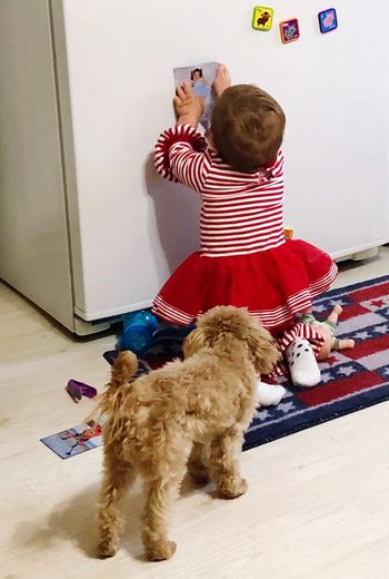 Creativity in her party dress Holidays Dress Fridge Refridgerator Magnets Poodle🐩 Poodle Love Baby Girl Laughter Smile Playful Play Time Niece 💕 Pets Domestic Mammal Domestic Animals One Animal Dog Canine Indoors  Home Interior One Person Childhood Pet Owner Child Christmas Real People