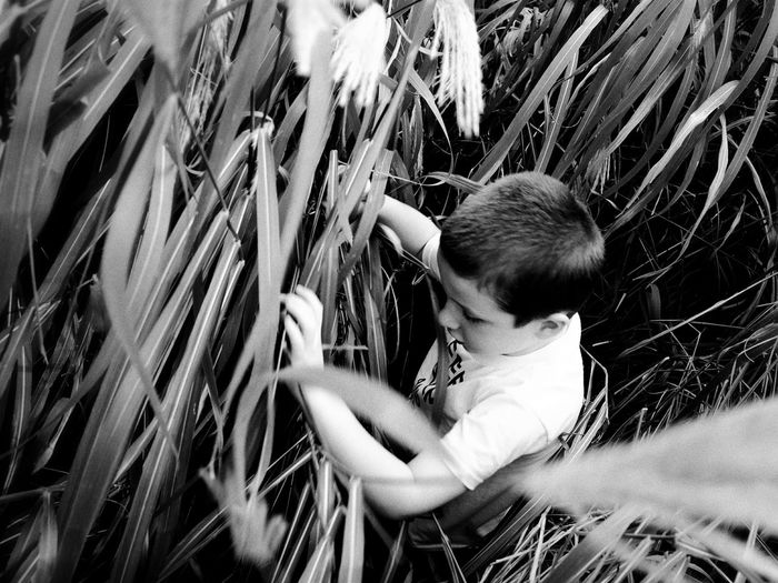 Tall Grass Exploration Monochrome A Day In The Life Kids Being Kids From Where I Stand Check This Out Exploring New Ground Taking Photos Learn & Shoot: Single Light Source