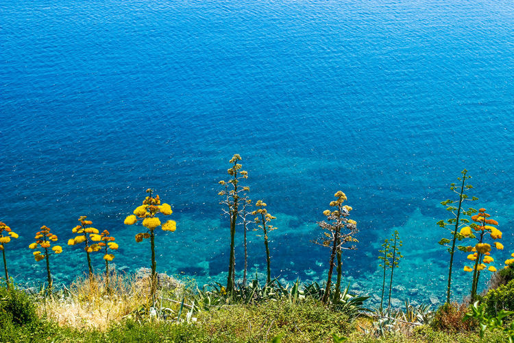 High Angle View Of Yellow Flowering Plants By Sea