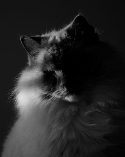 Cat and black. Blackandwhite Portrait Nature Cat Fur Enjoyinglife  Photo Photography