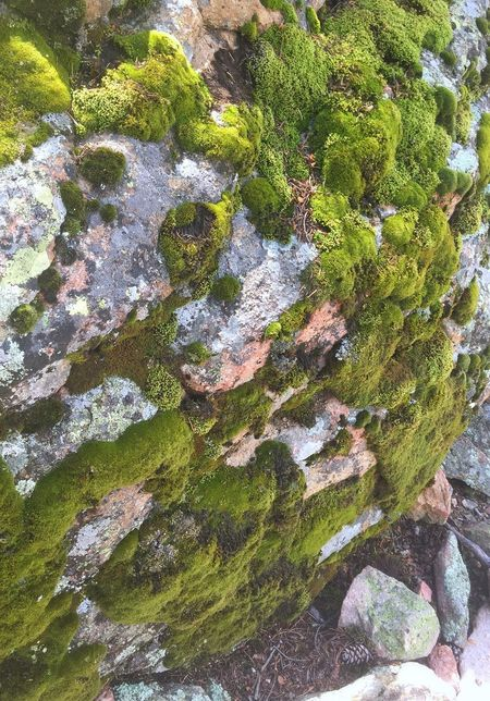 Green Moss Mossy Nature Natural Outdoors Outside Outside Photography Photography Colorado Colorado Photography Coloradophotographer Colorfulcolorado Day Woods Forest Tranquility Peace Peaceful Rock Beauty In Nature Hiking Hikingphotography Serenity
