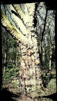 Impressing Tree Old Tree Texture Nature Braunschweig Brunswick
