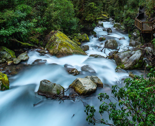 Tree Plant Long Exposure Water No People Rock Motion Nature Flowing Water Solid Blurred Motion Rock - Object Scenics - Nature Day Beauty In Nature Moss Forest Waterfall Flowing Stream - Flowing Water Purity Rainforest New Zealand