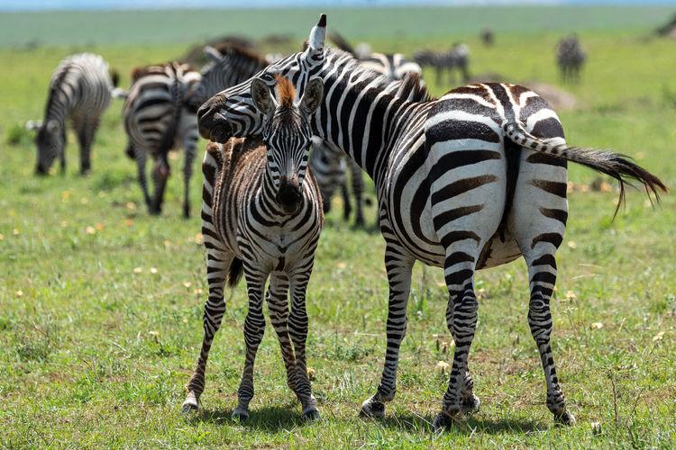 Photo taken in Lolgorien, Kenya
