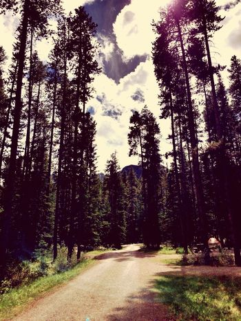 Into the woods.. Path to nowhere.. Trees Lakelouise Campground Hugging A Tree Sky Clouds Vintagefilter