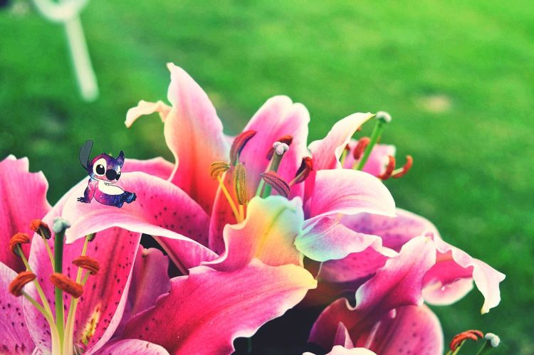 Flowering Plant Flower Petal Plant Fragility Beauty In Nature Vulnerability  Growth Pink Color Flower Head Freshness Close-up Inflorescence Focus On Foreground Day Pollen Nature No People Botany Stamen