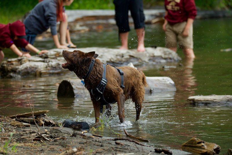 Water Mammal