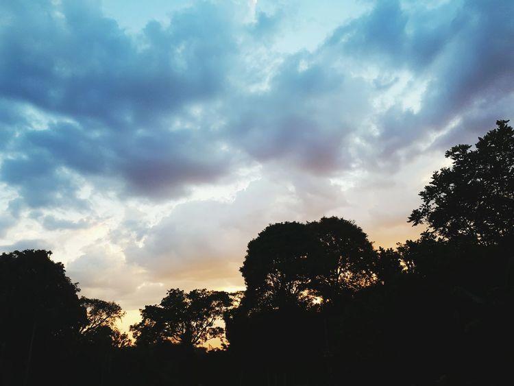 Tree Cloud - Sky Silhouette No People Sky Nature Outdoors