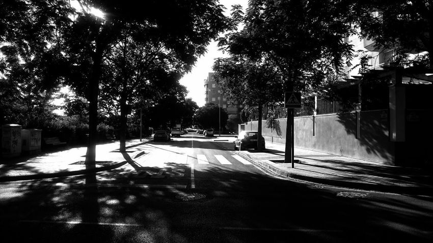 Architecture Black And White Blackandwhite Building Exterior Built Structure Car City Day Empty Road Growth Light And Shadow Mode Of Transportation Monochrome Nature No People Outdoors Plant Road Street Street Light Sunlight Transportation Tree