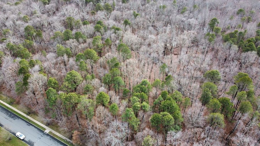 High angle view of trees growing in forest