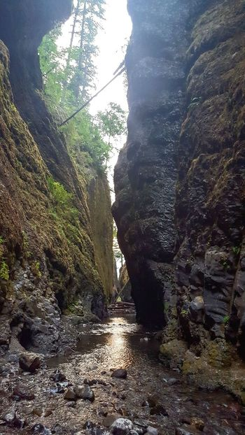 Oneonta Gorge. Tree Nature Outdoors Beauty In Nature Water Sky Columbia River Gorge Oregon Pnwwonderland PNW Wading Creek Scenery Recreation  Moss & Lichen Pretty Creek Hikes Creekside Trail Creekadventure Creek View Creeks And River Ways Oneonta Oneonta Creek Gorge Perspectives On Nature