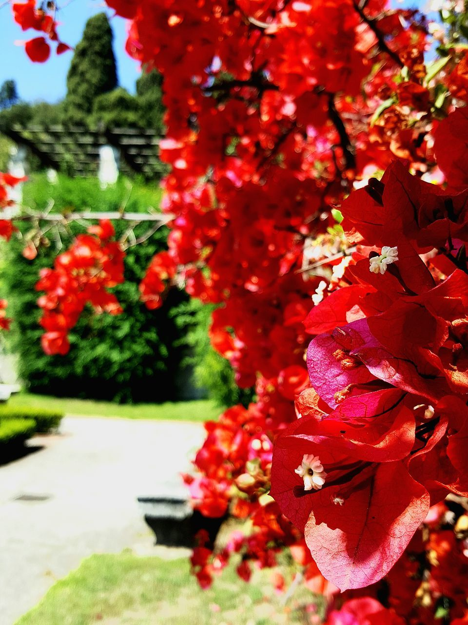 growth, tree, nature, beauty in nature, flower, red, no people, fragility, leaf, day, plant, close-up, outdoors, freshness