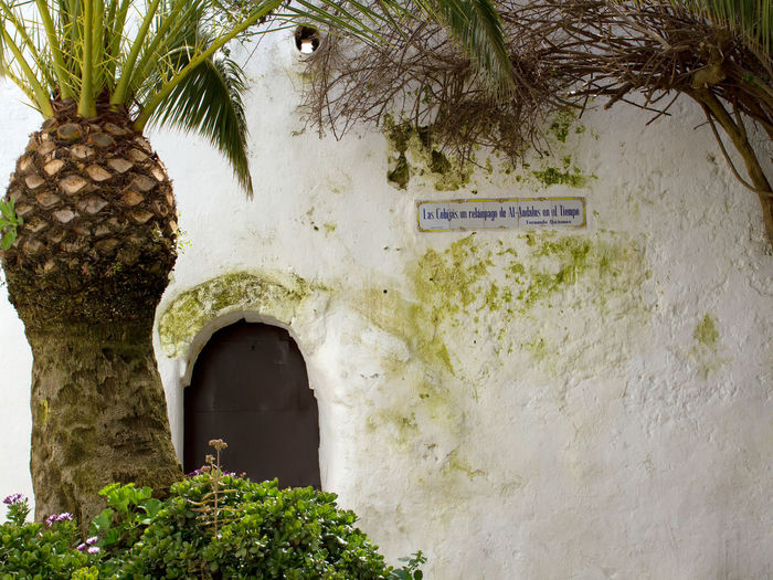 Old house facade in Vejer/Spain Andalusia Castle Castles Cities City Costa De La Luz Culture Heritage Door Doors House Facade House Facades House Wall Old Old Buildings Palm Tree Palm Trees SPAIN Tourist Destination Tourist Destinations Town Towns Travel Destinations Weathered White Village White Villages