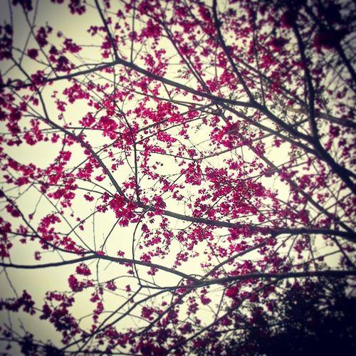 除夕 一個必須把所有壞事,不好的情緒通通停留在這一天的日子... 希望明天開始,那些情緒那些煩惱能夠像習俗一樣,不再繼續跟著我... 希望今天過後新的一年,別像今年這麼複雜,起伏這麼大~ 別像這櫻花,看似美麗紅艷~其實是如此錯綜複雜... 櫻花~要在耀眼的太陽底下才能開出盛開漂亮的花朵~ 人~或許也要正向開朗的面對~ 才會有精彩的過程~ 除夕夜 農曆新年快樂 拋開前一年 等待下次見面 🍌 🍌 🍌 👋 🆕