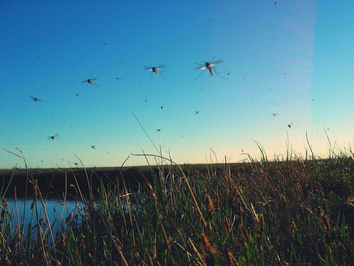Mosquito Flying Nature Large Group Of Animals Outdoors Animal Wildlife Beauty In Nature Rural Scene Landscape No People Sunset Agriculture Animal Themes Travel Destinations No Love </3 Soultravelers Water Variation Tranquil Scene