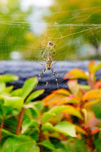 Macro Photography Spider Web One Animal Animal Themes Animals In The Wild Nature Insect Web Close-up Focus On Foreground Day Outdoors No People Animal Wildlife Animal Leg Fragility