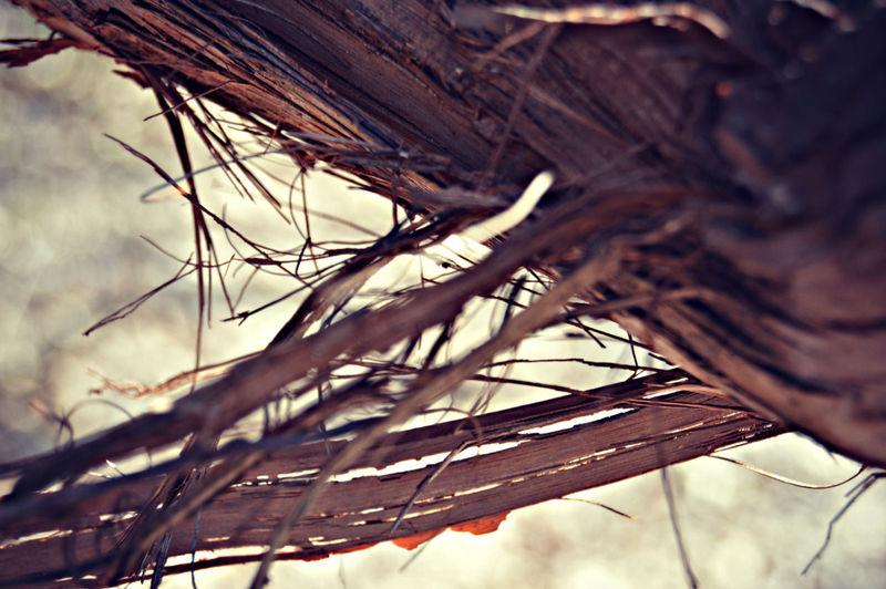 Treebark Tree