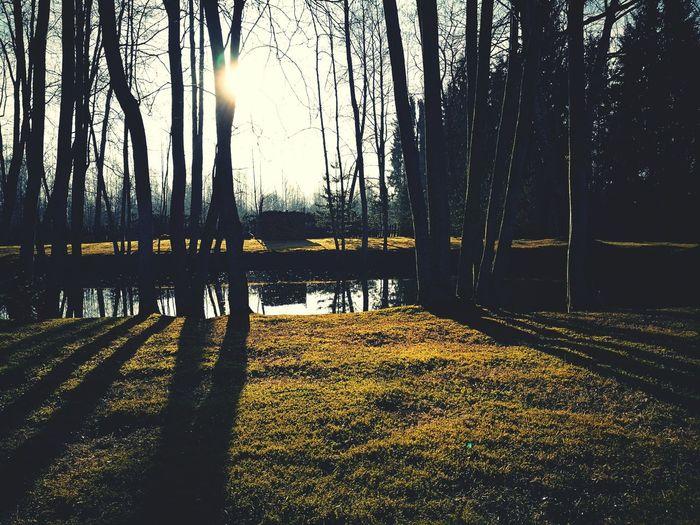 Estonia Countryside Idyllic Spring Mornings 08:45