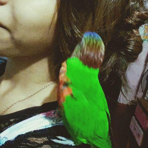 Piko ♥
