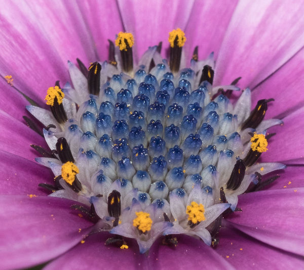 Flower Petal Nature Flower Head No People Close-up Beauty In Nature Pollen Plant Insect Purple Stamen Outdoors Springtime Beauty Fragility Day Growth Multi Colored Pollination Close Up Nature_collection Plants Nature Grass