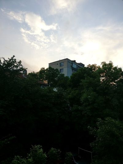 middle of the city jungle Appartment Building Tree City Sunset Sky Cloud - Sky Calm Residential Structure