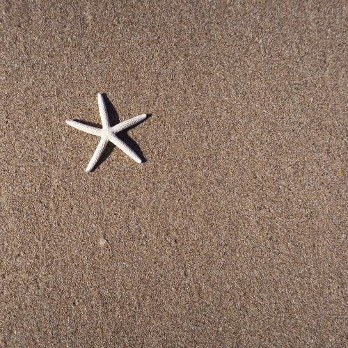 a starfish on