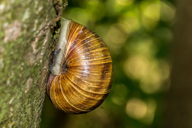 Snail on a branch, sleeping Wood Sleeping Nature Tree Spring Inside Outdoors Snail Close Up Springtime Slime Dry Fragility Closeup Close-up No People Animals In The Wild Green Color Snailhouse Gastropod Brown Color Animal Themes One Animal Focus On Foreground Animal Shell