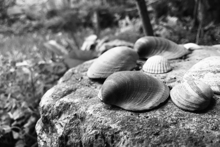 Shell Close-up Animal Shell Focus On Foreground Day No People Nature Rock Land Rock - Object Outdoors Invertebrate Beauty In Nature EyeEmNewHere This Is Strength It's About The Journey