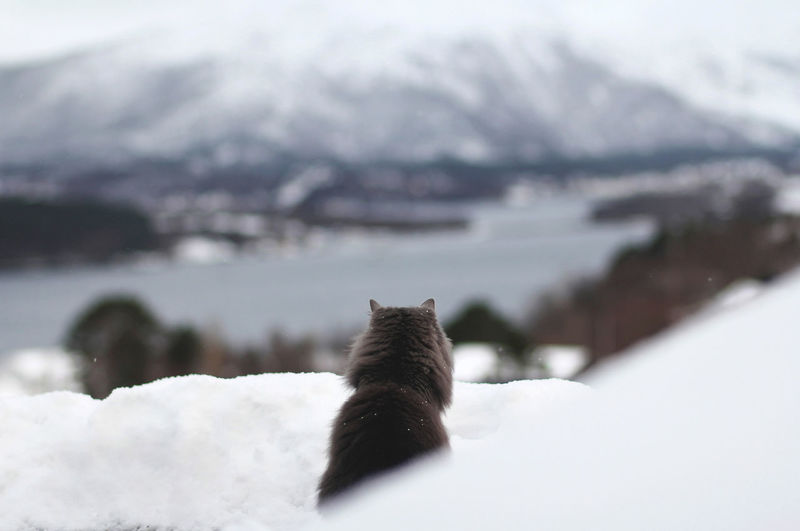 Close-up of cat on snow against mountain