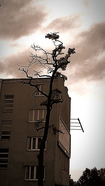 Tree Architecture Nature Nature Beauty Tall - High Day Solong Beautiful Nature Scary Scarytree