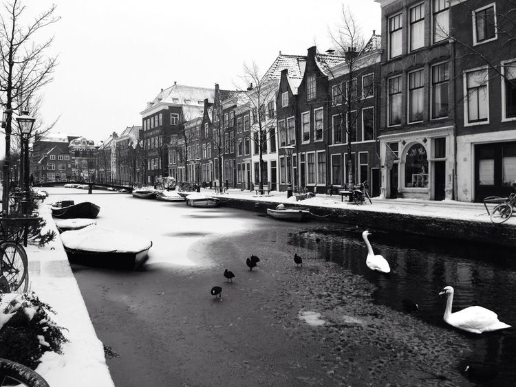Snow AMPt_community Leiden NEM Black&white