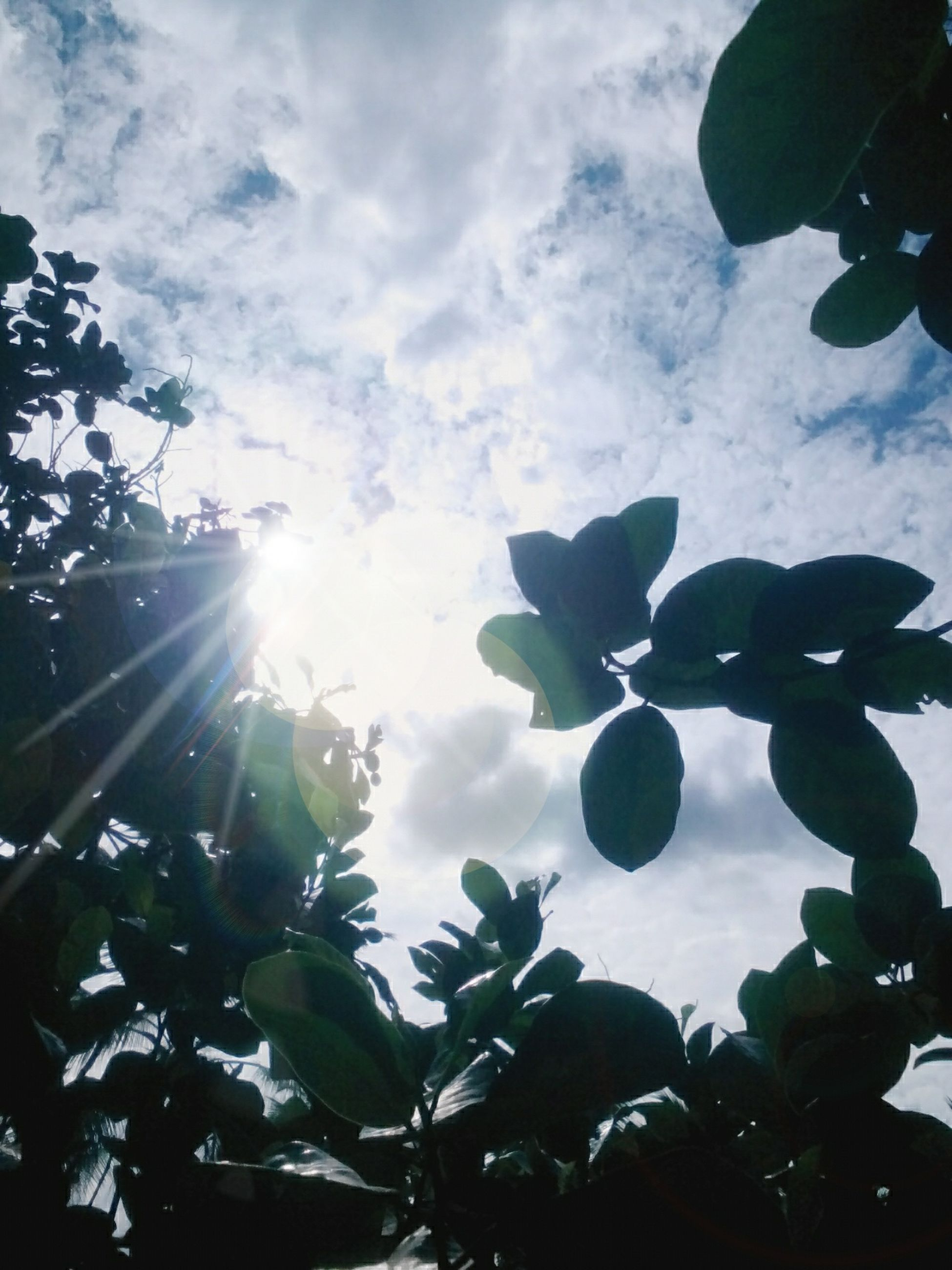 low angle view, leaf, sun, sky, growth, tree, nature, sunlight, sunbeam, beauty in nature, branch, lens flare, cloud - sky, tranquility, plant, day, outdoors, no people, close-up, cloudy