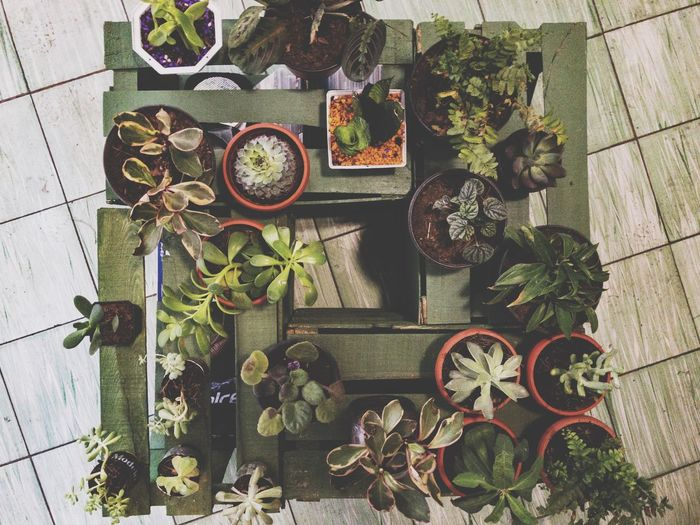 Mis plantas; mi nueva creatividad. Plants Life Homedecoration Home Interior Jalisco Guadalajara Plant Nature High Angle View Directly Above No People Day Growth Flower Succulent Plant Green Color Decoration