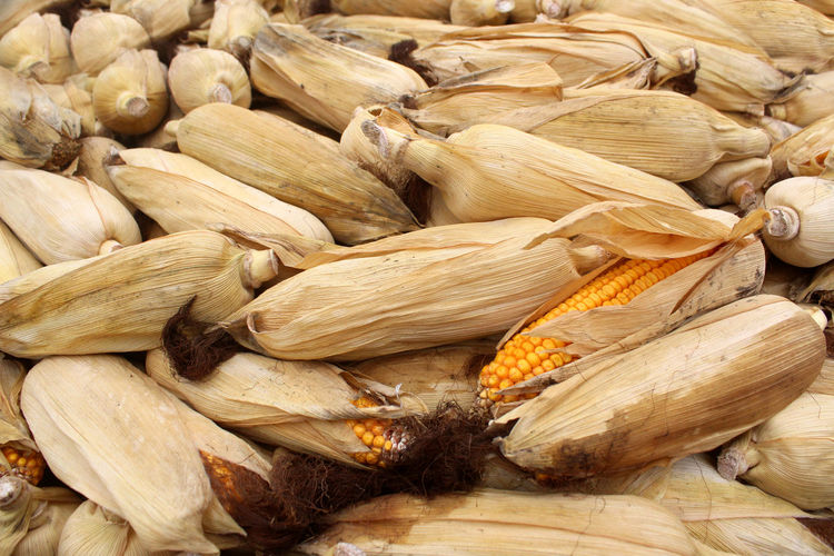 Food Wellbeing Healthy Eating Large Group Of Objects Freshness Corn Full Frame Still Life Abundance Vegetable No People Close-up Corn On The Cob High Angle View Ingredient Raw Food Sweetcorn Yellow Agriculture