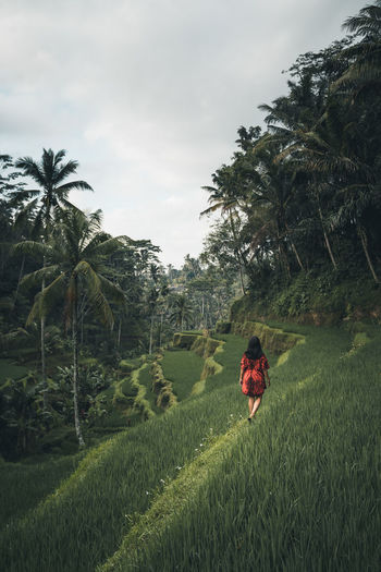 A morning stroll through the Tegallalang rice paddies outside Ubud Bali Bali, Indonesia INDONESIA Lifestyle Rice Travel Travel Photography Ubud, Bali Agriculture Beauty In Nature Field Grass Instagrammers Landscape Nature One Person Outdoors Rice Field Rice Fields  Rice Paddy Rural Scene Tranquil Scene Tranquility Travel Destinations Ubud The Traveler - 2018 EyeEm Awards The Great Outdoors - 2018 EyeEm Awards