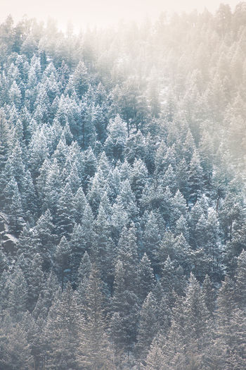 Beauty In Nature Tranquility No People Scenics - Nature Backgrounds Day Tranquil Scene Nature Full Frame Environment Tree Plant High Angle View Winter Land Outdoors Sunlight Forest Cold Temperature