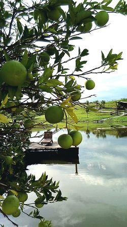 Creation Of God ! Delucious Orange Lime !!!!