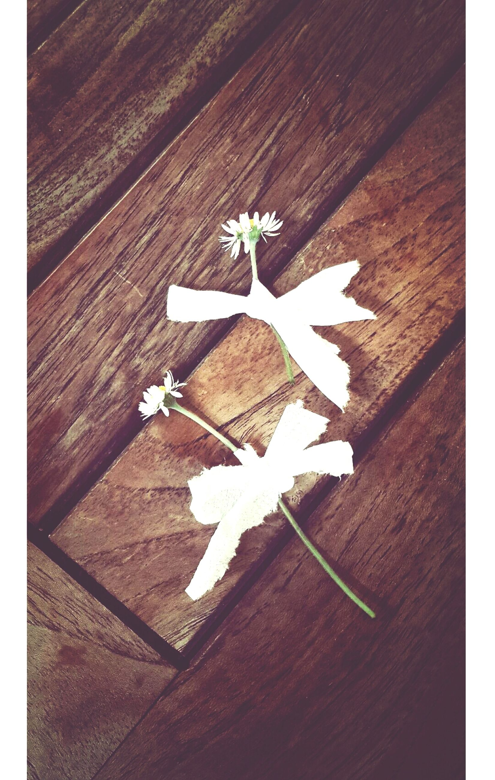 flower, white color, wood - material, high angle view, indoors, text, wall - building feature, close-up, wooden, no people, communication, day, built structure, creativity, wall, white, art, art and craft, decoration, arrow symbol