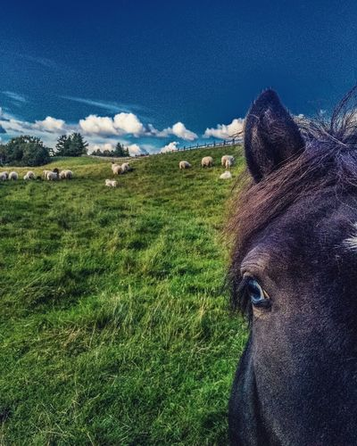 Domestic Animals Animal Themes Green Color Sky No People Close-up Horse Eye Blueeye