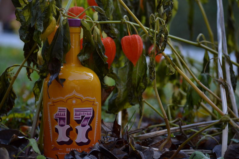 2017 Autumn Sweden Bottle Close-up Day Drink Fall Glögg Growth Leaf Nature No People Orange Color Outdoors Text Tree Yellow The Still Life Photographer - 2018 EyeEm Awards